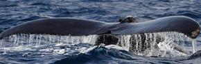 クジラ日記