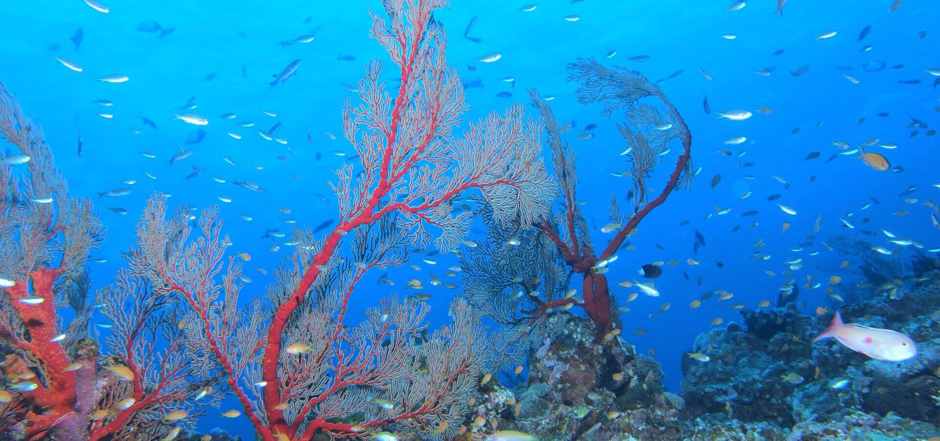 ダイビングスポットの慶良間諸島の海